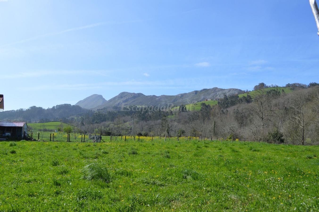 Fotos de la flor de asturias casa rural en llanes asturias - Fotorural asturias ...