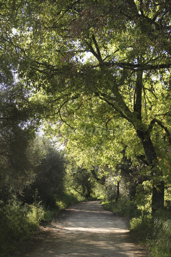 Fotos de cortijo barrera casa rural en el bosque c diz - Casas rurales en el bosque cadiz baratas ...