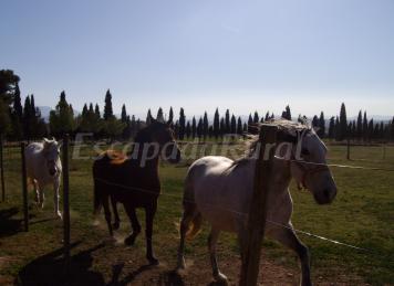Cortijo Ferradores (100% Rural)
