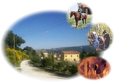 Fattoria  - Bed & Breakfast Ziamelia (Macerata)