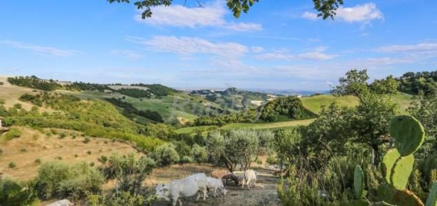 Costa della figura casa rural en montefelcino pesaro e - Piscina parco della pace pesaro ...